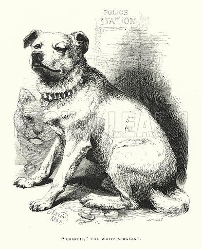 """Charlie,"" the white sergeant. Illustration for Animal Sagacity (S W Partridge, c 1866)."
