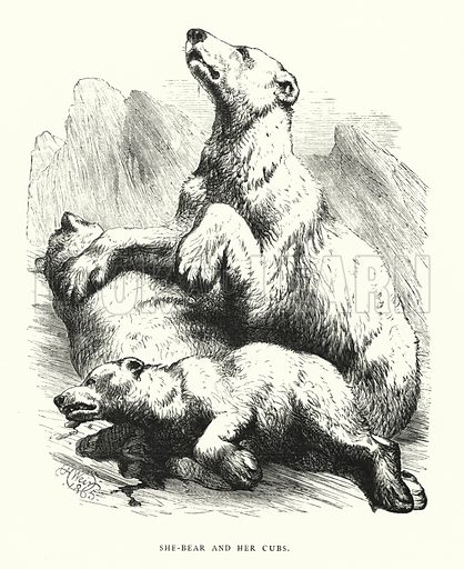 She-bear and her cubs. Illustration for Animal Sagacity (S W Partridge, c 1866).