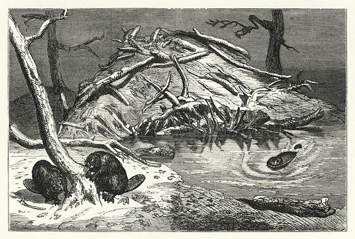 The lodge built by the beavers in the Zoological Gardens, London. Illustration for Aunt Judy's Magazine, 1866.