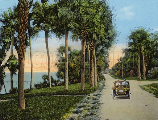 Riverside Drive, Fort Pierce, Florida. Illustration for Beautiful Florida, The Winter Playground of the Nation (Curt Teich, c 1920).