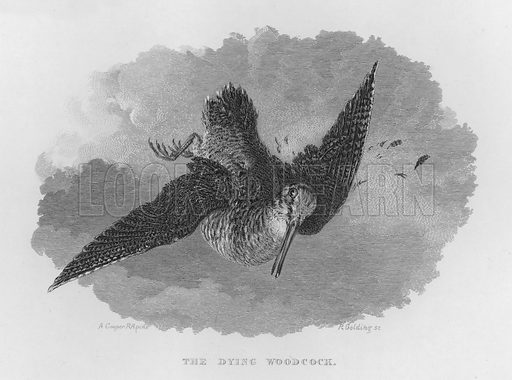 The Dying Woodcock. Illustration for unidentified book of sports, c 1840.