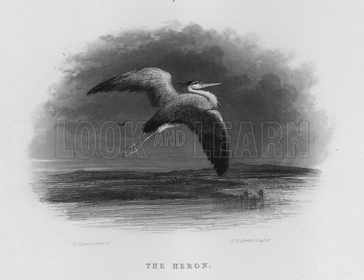 The Heron. Illustration for unidentified book of sports, c 1840.