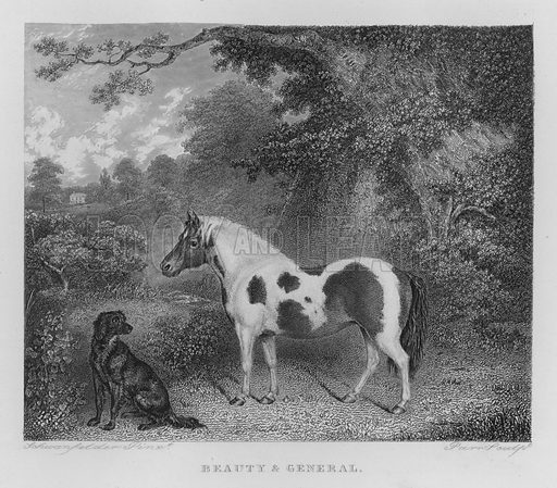 Beauty and General. Illustration for unidentified book of sports, c 1840.