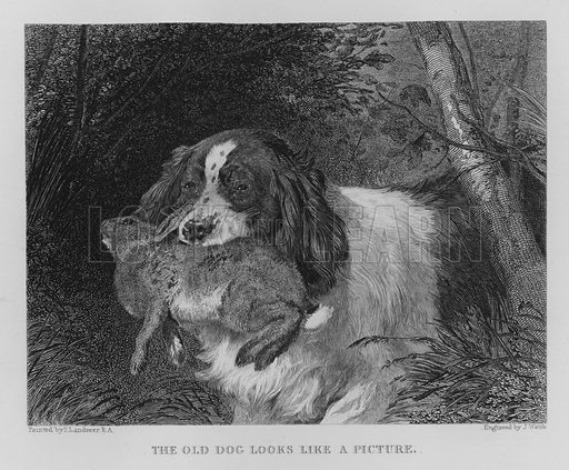 The Old Dog Looks Like a Picture. Illustration for unidentified book of sports, c 1840.