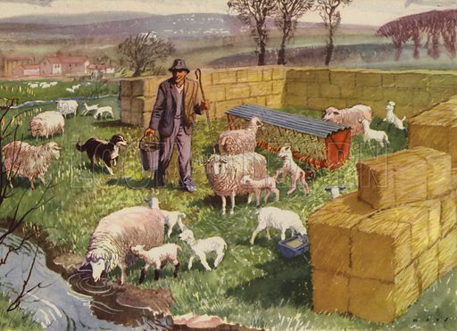 Lambing time. Illustration for In the Country by E R Boyce (Macmillan, c 1950).