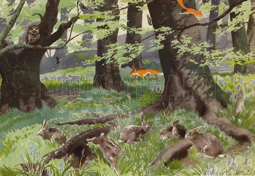 The rabbits at play. Illustration for In the Country by E R Boyce (Macmillan, c 1950).