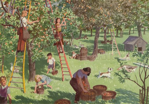 At work in the orchard. Illustration for In the Country by E R Boyce (Macmillan, c 1950).