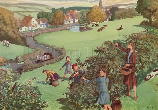Picking blackberries for jam. Illustration for In the Country by E R Boyce (Macmillan, c 1950).