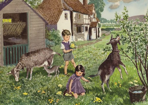 An afternoon with the goats. Illustration for In the Country by E R Boyce (Macmillan, c 1950).