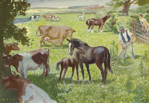 Out in the fields. Illustration for In the Country by E R Boyce (Macmillan, c 1950).