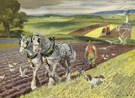 The fields are ploughed. Illustration for On the Farm by E R Boyce (Macmillan, c 1950).