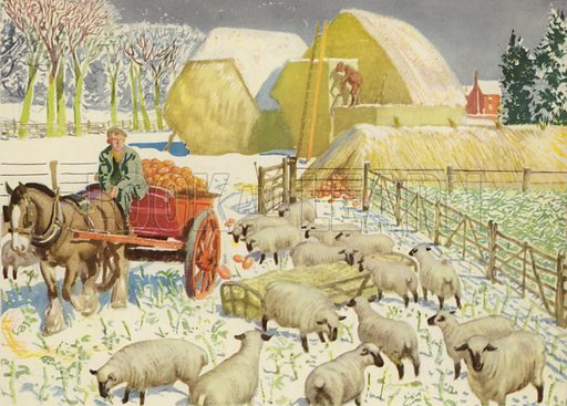 Food for the winter. Illustration for On the Farm by E R Boyce (Macmillan, c 1950).