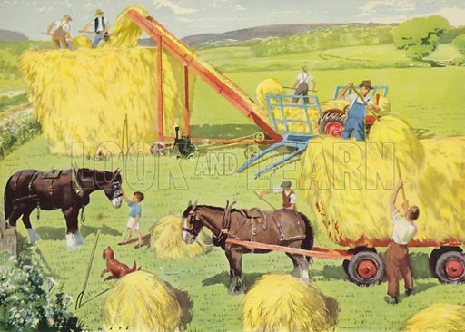 Hay-making time. Illustration for On the Farm by E R Boyce (Macmillan, c 1950).