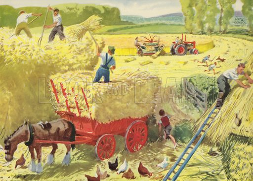 The corn is cut. Illustration for On the Farm by E R Boyce (Macmillan, c 1950).