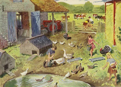 In the barn-yard. Illustration for On the Farm by E R Boyce (Macmillan, c 1950).