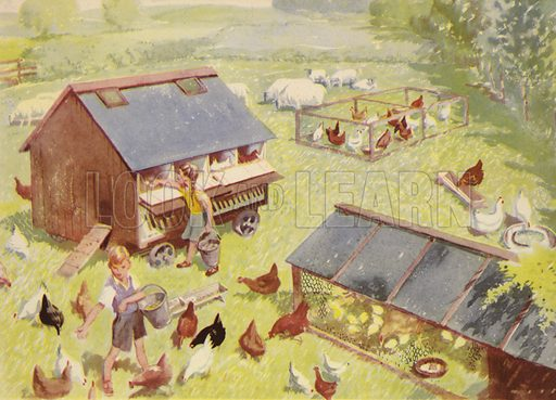 Feeding the hens. Illustration for On the Farm by E R Boyce (Macmillan, c 1950).