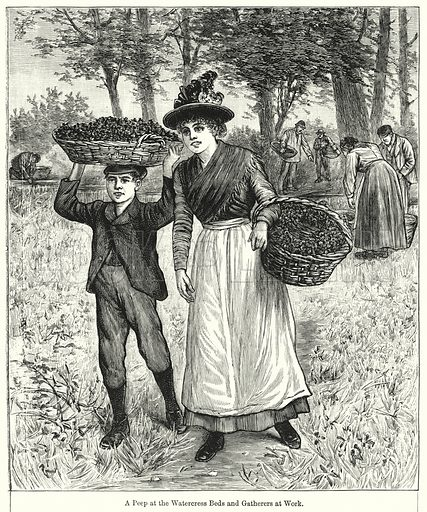 A Peep at the Watercress Beds and Gatherers at Work. Illustration for Chatterbox (1901). Publication made up mainly of earlier illustrations.