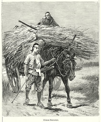 Chinese Harvesters. Illustration for Chatterbox (1901). Publication made up mainly of earlier illustrations.