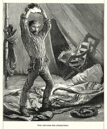 Tom's Adventure with a Deadly Snake. Illustration for Chatterbox (1901). Publication made up mainly of earlier illustrations.