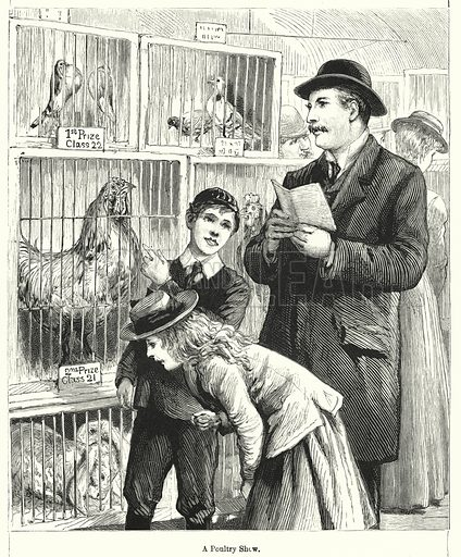 A Poultry Show. Illustration for Chatterbox (1901). Publication made up mainly of earlier illustrations.