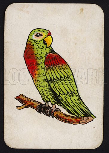 Parrot.  One of a set of Snap game cards published by Chad Valley, early 20th century.
