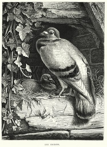 The Pigeons. Illustration for The Children's Friend (1872).