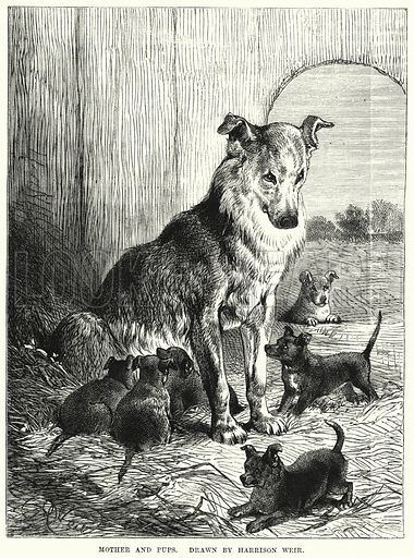 Mother and Pups. Illustration for The Children's Friend (1872).