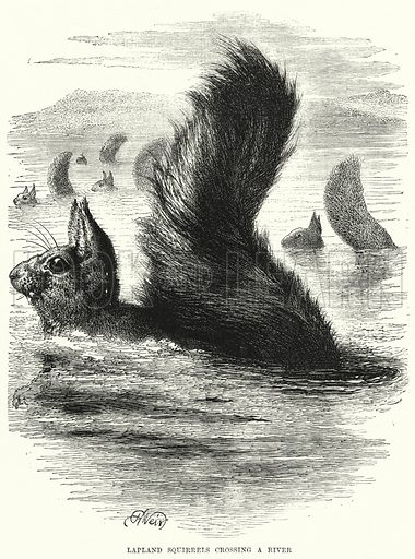 Lapland Squirrels crossing a River. Illustration for The Children's Friend (1872).