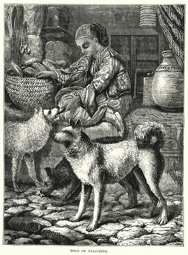 Dogs of Palestine. Illustration for The Children's Friend (1872).