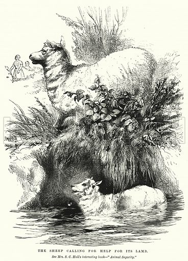 The Sheep calling for Help for its Lamb. Illustration for The Children's Friend (1872).