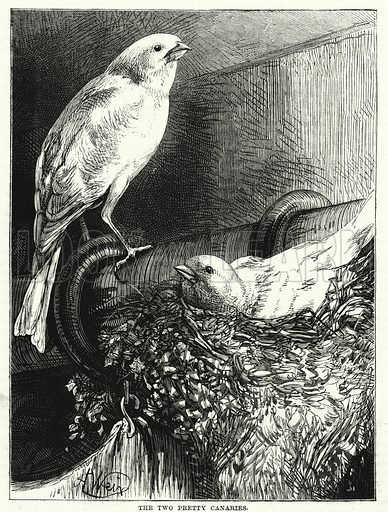 The Two Pretty Canaries. Illustration for The Children's Friend (1881).