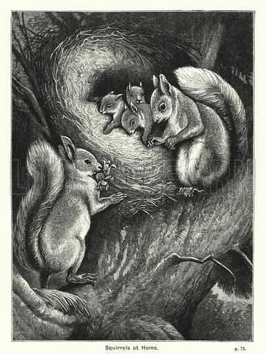 Squirrels at Home. Illustration for The Children's Friend (1888).