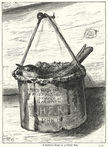 A Robin's Nest in a Paint Pot. Illustration for The Children's Friend (1890).