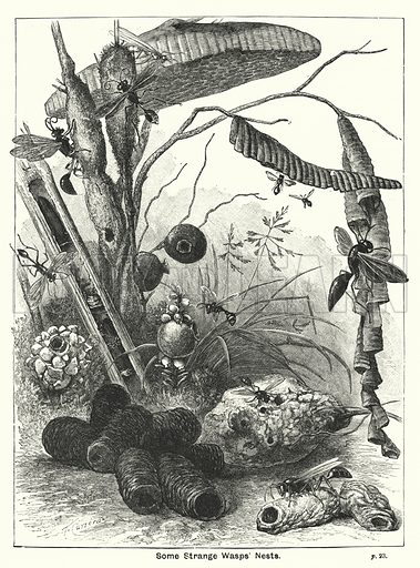 Some Strange Wasps' Nests. Illustration for The Children's Friend (1891).