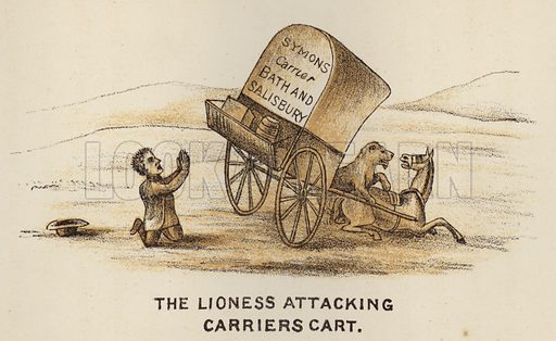 The Lioness Attacking Carriers Cart. Illustration for Road Scrapings, Coaches and Coaching by M E Haworth (Tinsley, 1882).