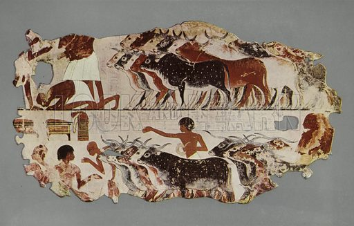 Scene representing the driving of a large herd of cattle, for stocktaking purposes, on an Egyptian farm. In the lower register is the scribe, seated and writing a list of the groups, each containing five. British Museum, Third Egyptian Room. From a wall-painting in a tomb at Thebes. XVIIIth Dynasty. Illustration for Wall Decorations of Egyptian Tombs illustrated from examples in the British Museum (British Museum, 1914).
