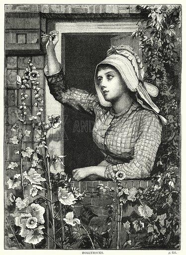 Hollyhocks. Illustration for The Family Friend (1866).