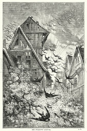 The swallows' arrival. Illustration for The Family Friend (1866).