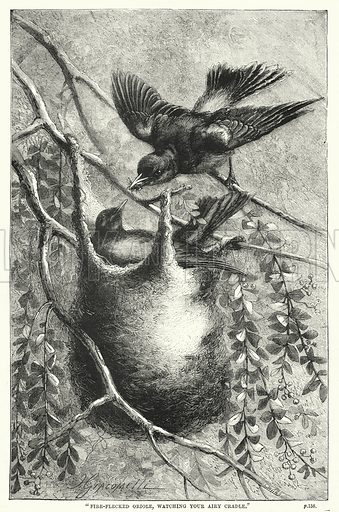 """""""Fire-flecked oriole, watching your airy cradle."""" Illustration for The Family Friend (1887)."""