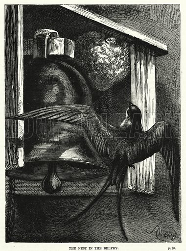 The nest in the belfry. Illustration for The Family Friend (1881).
