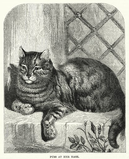 Puss at her ease. Illustration for The Family Friend (1881).