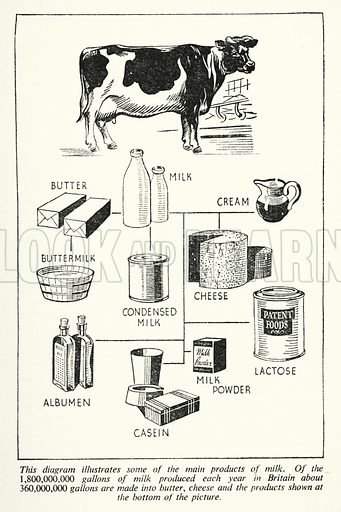 This diagram illustrates some of the main products of milk. Illustration for General Knowledge Course (Odhams, c 1945).