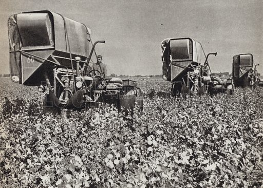 Mechanized cotton picking in Uzbekistan. Illustration for Glimpses of the USSR its Economy and Geography by Nikolai Mikhailov (Foreign Languages Publishing House, Moscow, 1960).
