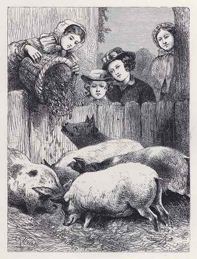 Feeding the Pigs. Illustration for The History of the Robins by Mrs Trimmer (Griffith and Farran, 1869).