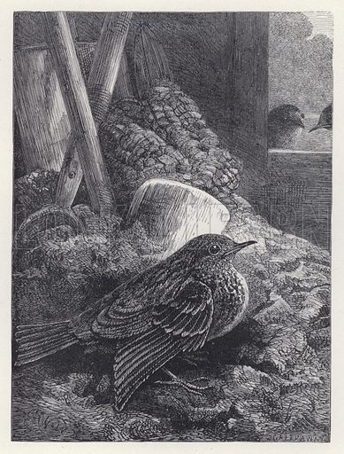 Little Robin Safely Housed. Illustration for The History of the Robins by Mrs Trimmer (Griffith and Farran, 1869).