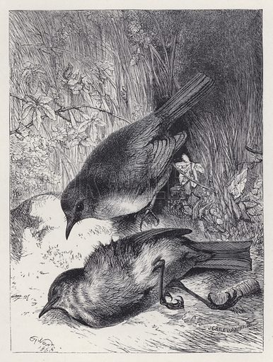 Death of Robin's Mate. Illustration for The History of the Robins by Mrs Trimmer (Griffith and Farran, 1869).