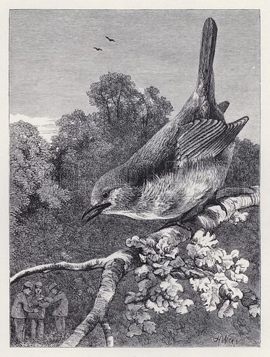 The Robin Watching the Boys with the Nest. Illustration for The History of the Robins by Mrs Trimmer (Griffith and Farran, 1869).
