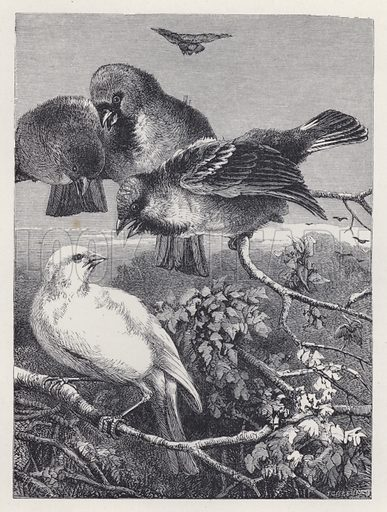 The Persecuted Canary. Illustration for The History of the Robins by Mrs Trimmer (Griffith and Farran, 1869).