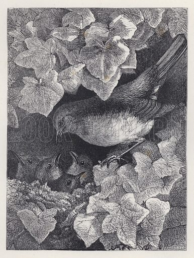 Robin Lectured by His Father. Illustration for The History of the Robins by Mrs Trimmer (Griffith and Farran, 1869).