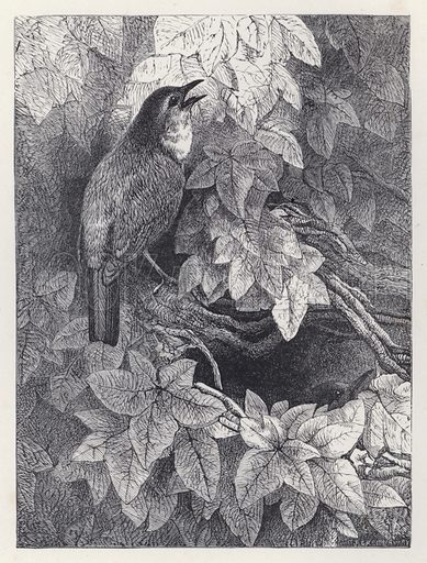 The Robins' Nest. Illustration for The History of the Robins by Mrs Trimmer (Griffith and Farran, 1869).